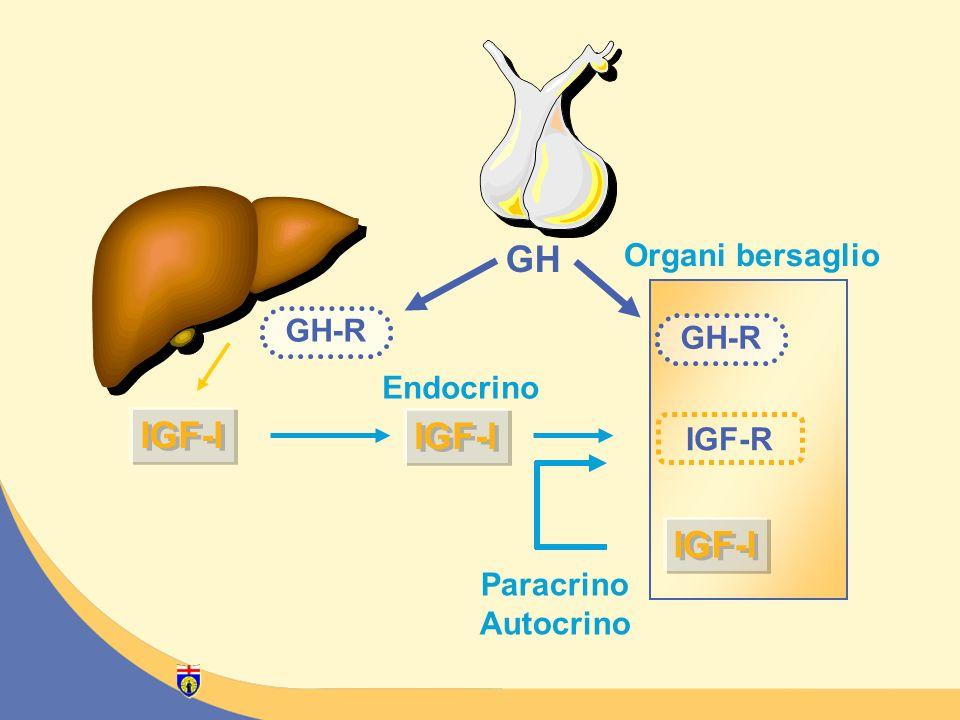 GH IGF-R IGF-I GH-R Organi bersaglio Paracrino Autocrino Endocrino IGF-I GH-R