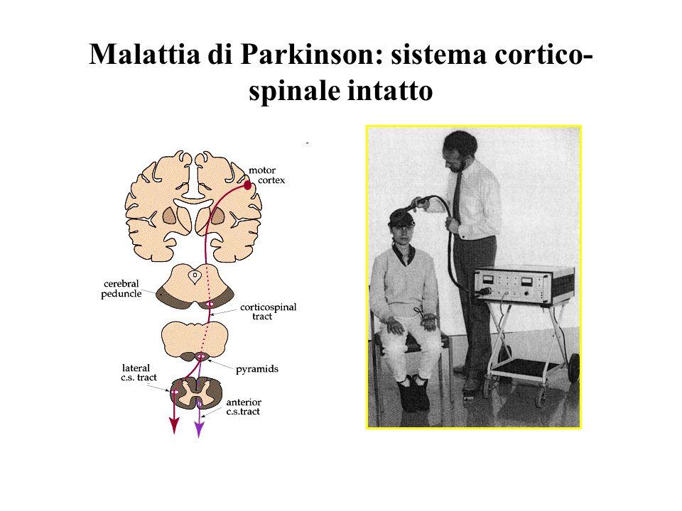 Malattia di Parkinson: sistema cortico- spinale intatto