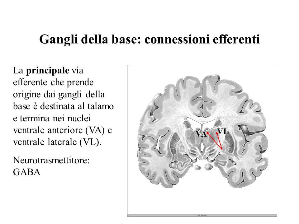 Gangli della base: connessioni efferenti VL VA La principale via efferente che prende origine dai gangli della base è destinata al talamo e termina ne