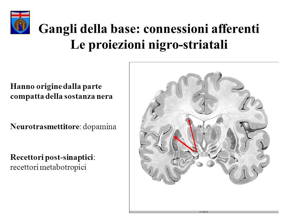 Gangli della base: connessioni afferenti Le proiezioni nigro-striatali Hanno origine dalla parte compatta della sostanza nera Neurotrasmettitore: dopa