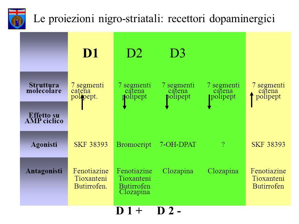 Le proiezioni nigro-striatali: recettori dopaminergici D1D2D3 D4D4 D5D5 Struttura molecolare 7 segmenti catena polipept. 7 segmenti catena polipept Ef