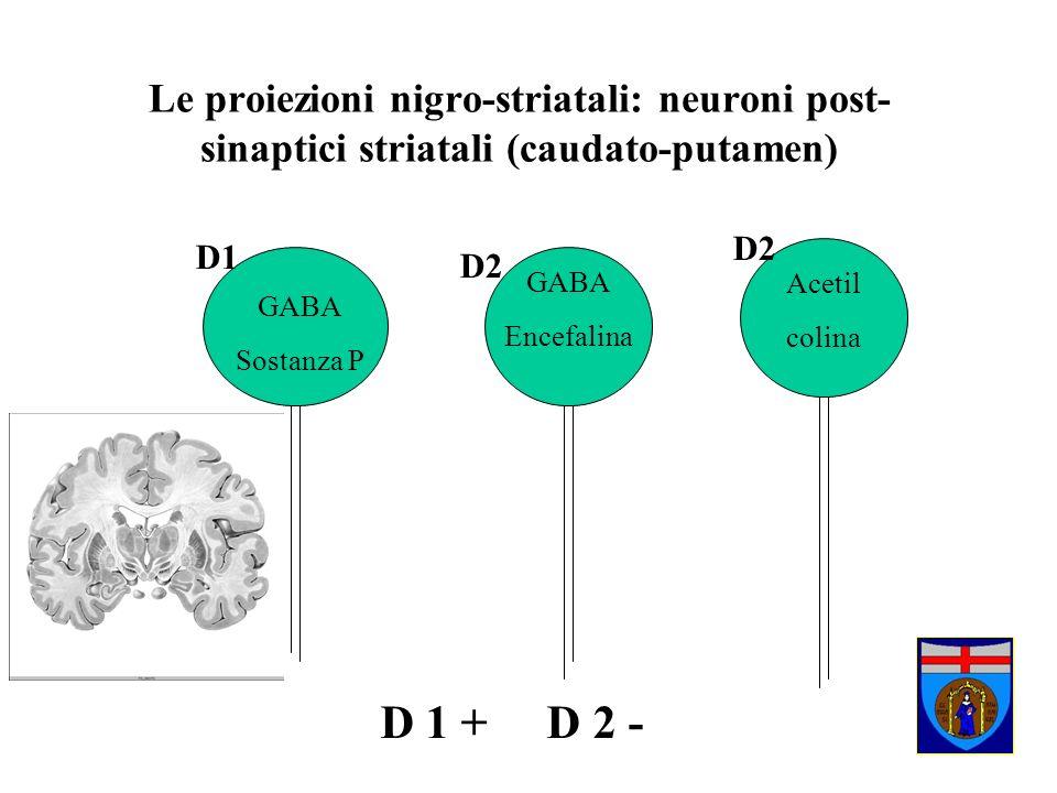 Le proiezioni nigro-striatali: neuroni post- sinaptici striatali (caudato-putamen) GABA Encefalina Acetil colina GABA Sostanza P D1 D2 D 1 + D 2 -