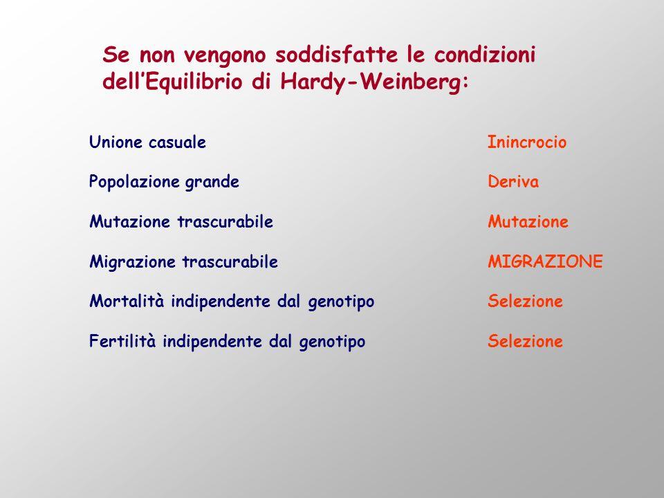 Se non vengono soddisfatte le condizioni dellEquilibrio di Hardy-Weinberg: Unione casualeInincrocio Popolazione grandeDeriva Mutazione trascurabileMut