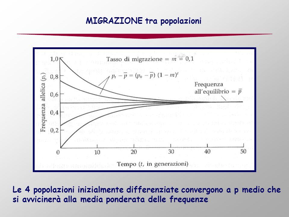 MIGRAZIONE tra popolazioni Le 4 popolazioni inizialmente differenziate convergono a p medio che si avvicinerà alla media ponderata delle frequenze