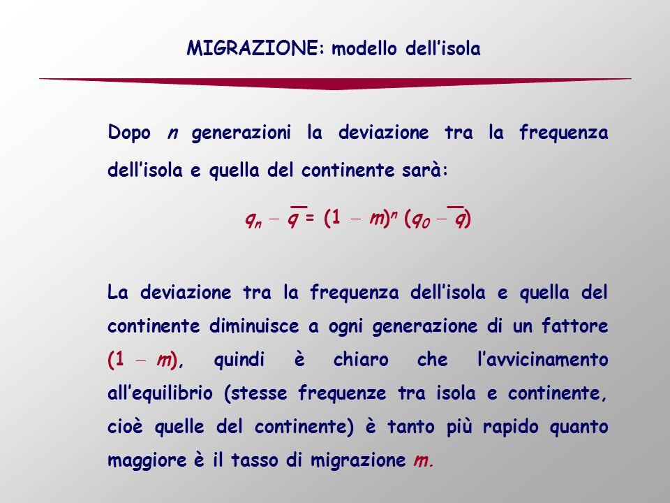 MIGRAZIONE: modello dellisola Dopo n generazioni la deviazione tra la frequenza dellisola e quella del continente sarà: q n q = (1 m) n (q 0 q) La deviazione tra la frequenza dellisola e quella del continente diminuisce a ogni generazione di un fattore (1 m), quindi è chiaro che lavvicinamento allequilibrio (stesse frequenze tra isola e continente, cioè quelle del continente) è tanto più rapido quanto maggiore è il tasso di migrazione m.