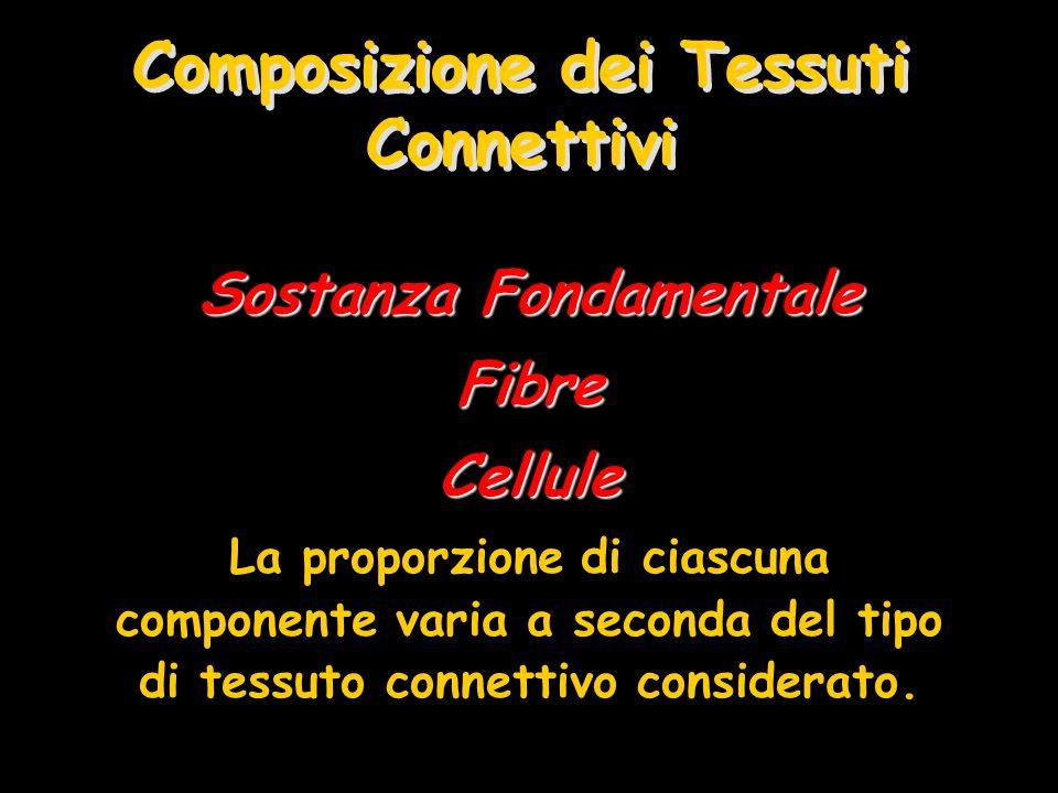 Composizione dei Tessuti Connettivi Sostanza Fondamentale FibreCellule La proporzione di ciascuna componente varia a seconda del tipo di tessuto conne