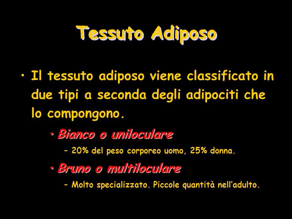 Tessuto Adiposo Il tessuto adiposo viene classificato in due tipi a seconda degli adipociti che lo compongono. Bianco o uniloculareBianco o unilocular