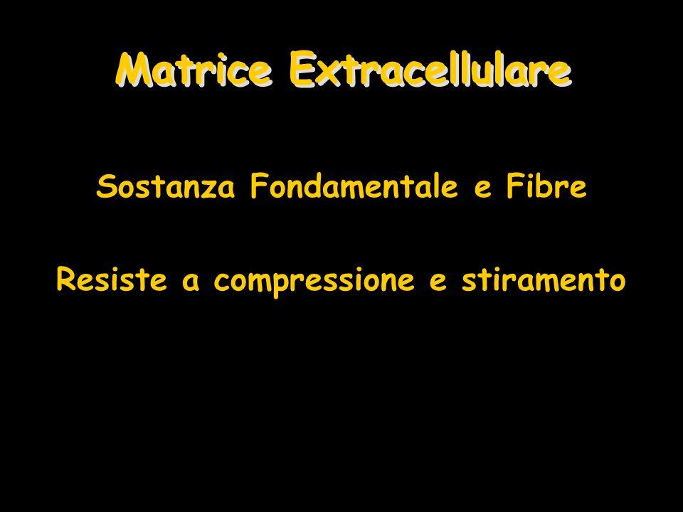 Matrice Extracellulare Sostanza Fondamentale e Fibre Resiste a compressione e stiramento