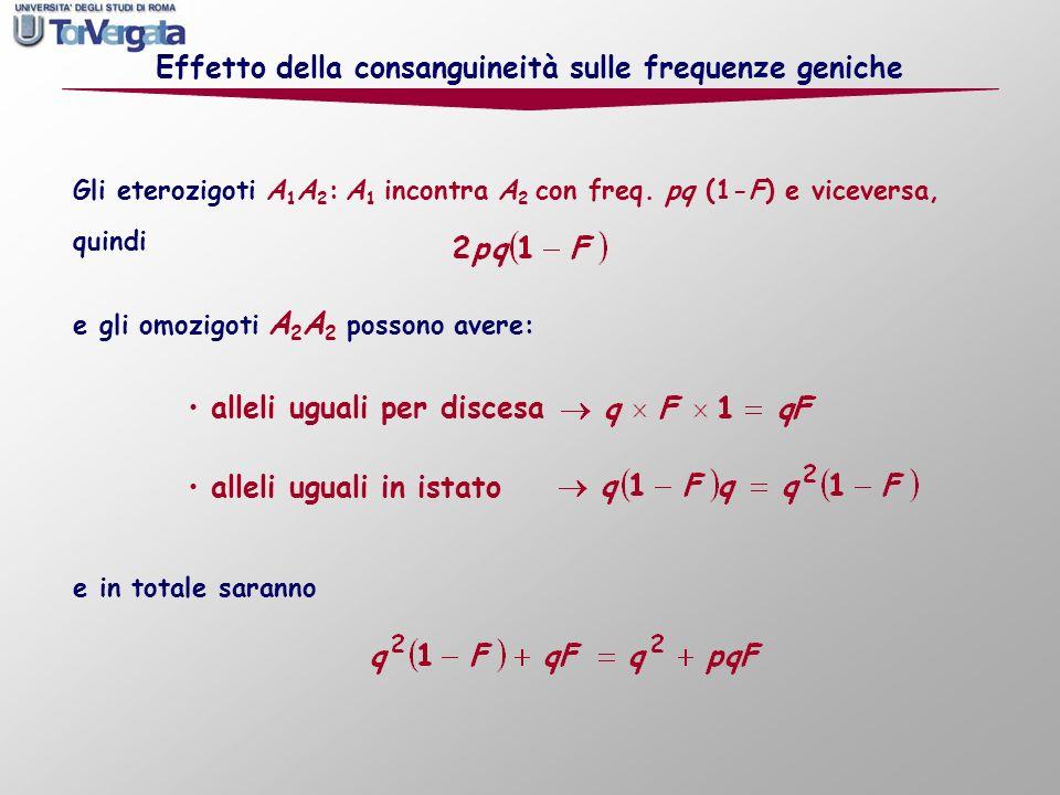 Gli eterozigoti A 1 A 2 : A 1 incontra A 2 con freq. pq (1-F) e viceversa, quindi Effetto della consanguineità sulle frequenze geniche alleli uguali p