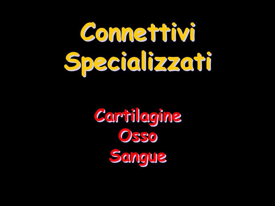 Connettivi Specializzati Cartilagine Osso Sangue Connettivi Specializzati Cartilagine Osso Sangue