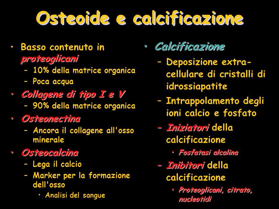 Osteoide e calcificazione proteoglicaniBasso contenuto in proteoglicani –10% della matrice organica –Poca acqua Collagene di tipo I e VCollagene di ti