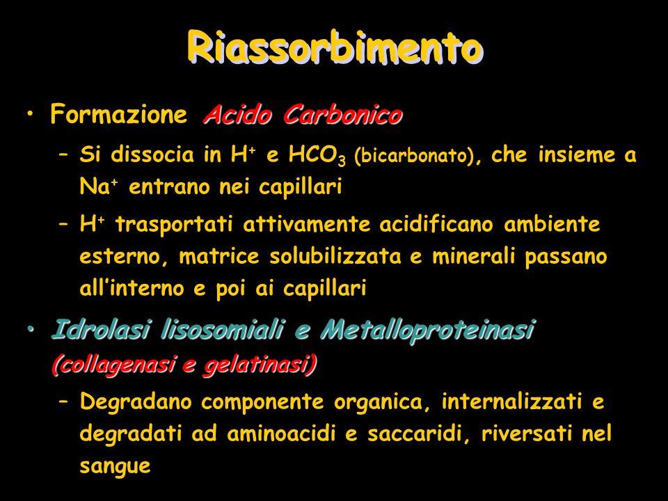 Riassorbimento Acido CarbonicoFormazione Acido Carbonico –Si dissocia in H + e HCO 3 (bicarbonato), che insieme a Na + entrano nei capillari –H + tras