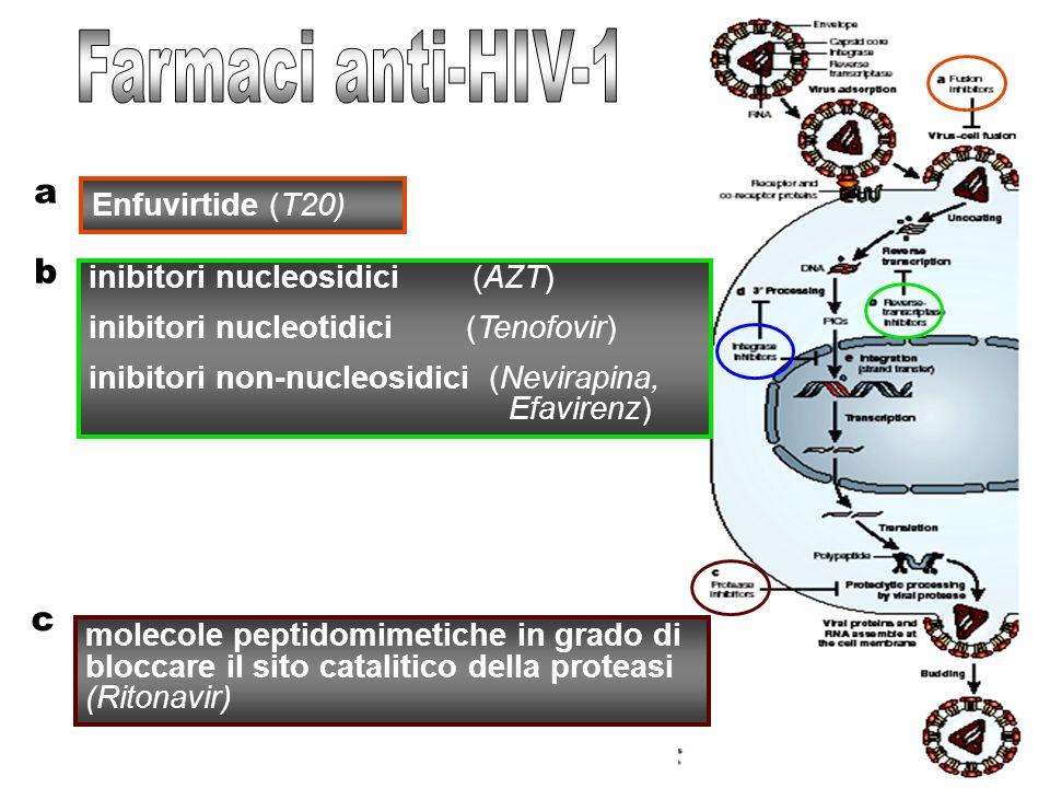 a Enfuvirtide (T20) b inibitori nucleosidici (AZT) inibitori nucleotidici (Tenofovir) inibitori non-nucleosidici (Nevirapina, Efavirenz) molecole peptidomimetiche in grado di bloccare il sito catalitico della proteasi (Ritonavir) c