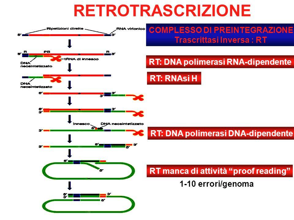 COMPLESSO DI PREINTEGRAZIONE Trascrittasi Inversa : RT RETROTRASCRIZIONE RT manca di attività proof reading 1-10 errori/genoma RT: DNA polimerasi RNA-dipendente RT: RNAsi H RT: DNA polimerasi DNA-dipendente