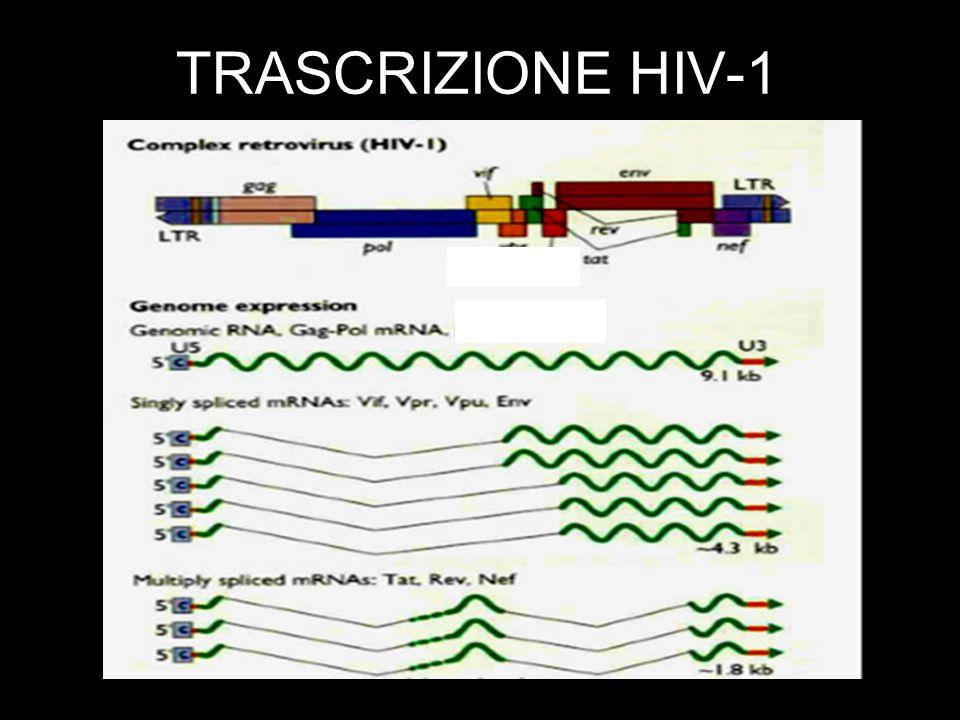 TRASCRIZIONE HIV-1