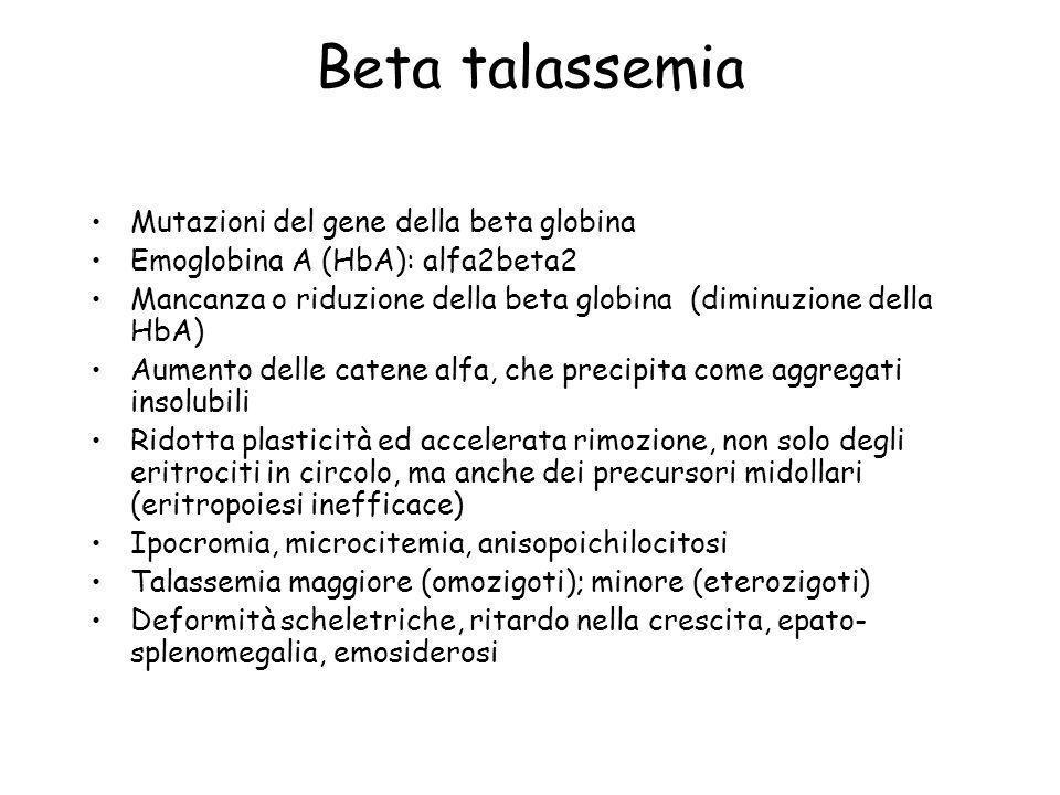 Beta talassemia Mutazioni del gene della beta globina Emoglobina A (HbA): alfa2beta2 Mancanza o riduzione della beta globina (diminuzione della HbA) A