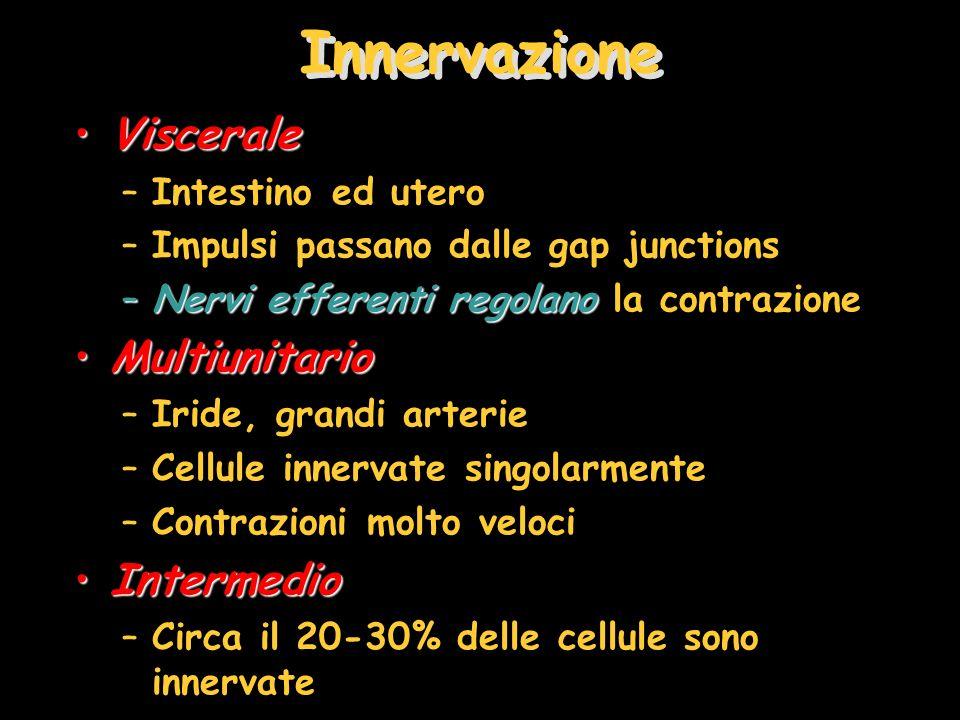 Innervazione VisceraleViscerale –Intestino ed utero –Impulsi passano dalle gap junctions –Nervi efferentiregolano –Nervi efferenti regolano la contraz