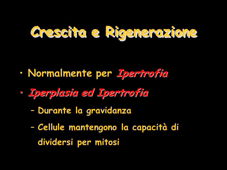 Crescita e Rigenerazione IpertrofiaNormalmente per Ipertrofia Iperplasia ed IpertrofiaIperplasia ed Ipertrofia –Durante la gravidanza –Cellule manteng