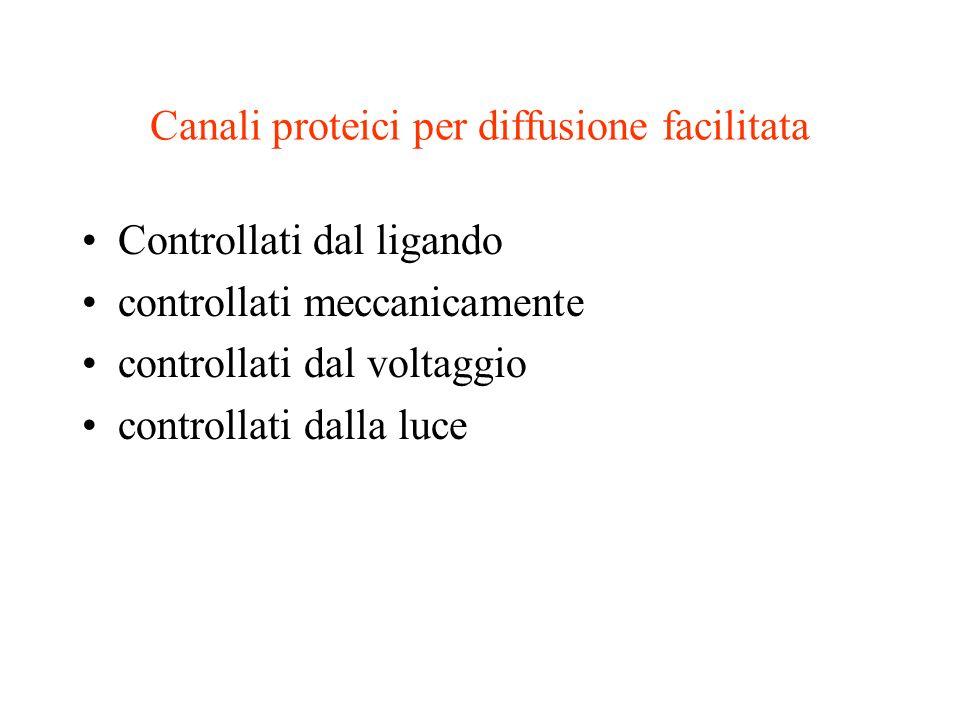 Canali proteici per diffusione facilitata Controllati dal ligando controllati meccanicamente controllati dal voltaggio controllati dalla luce