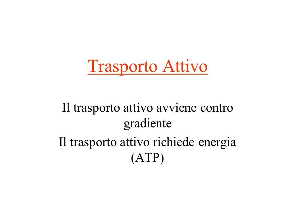Trasporto Attivo Il trasporto attivo avviene contro gradiente Il trasporto attivo richiede energia (ATP)