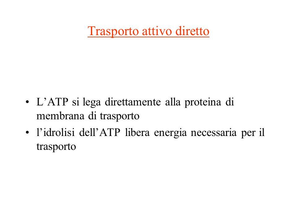 Trasporto attivo diretto LATP si lega direttamente alla proteina di membrana di trasporto lidrolisi dellATP libera energia necessaria per il trasporto