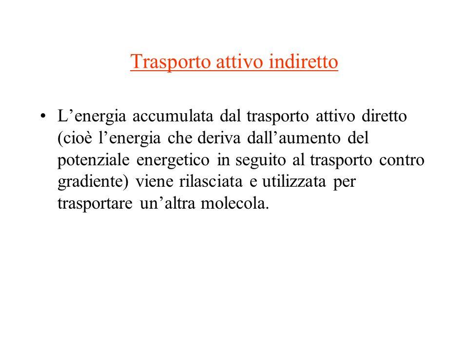 Trasporto attivo indiretto Lenergia accumulata dal trasporto attivo diretto (cioè lenergia che deriva dallaumento del potenziale energetico in seguito
