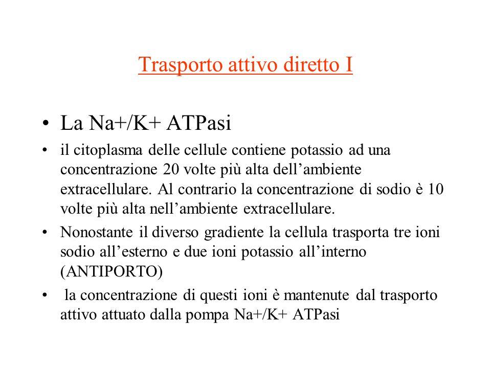 Trasporto attivo diretto I La Na+/K+ ATPasi il citoplasma delle cellule contiene potassio ad una concentrazione 20 volte più alta dellambiente extrace