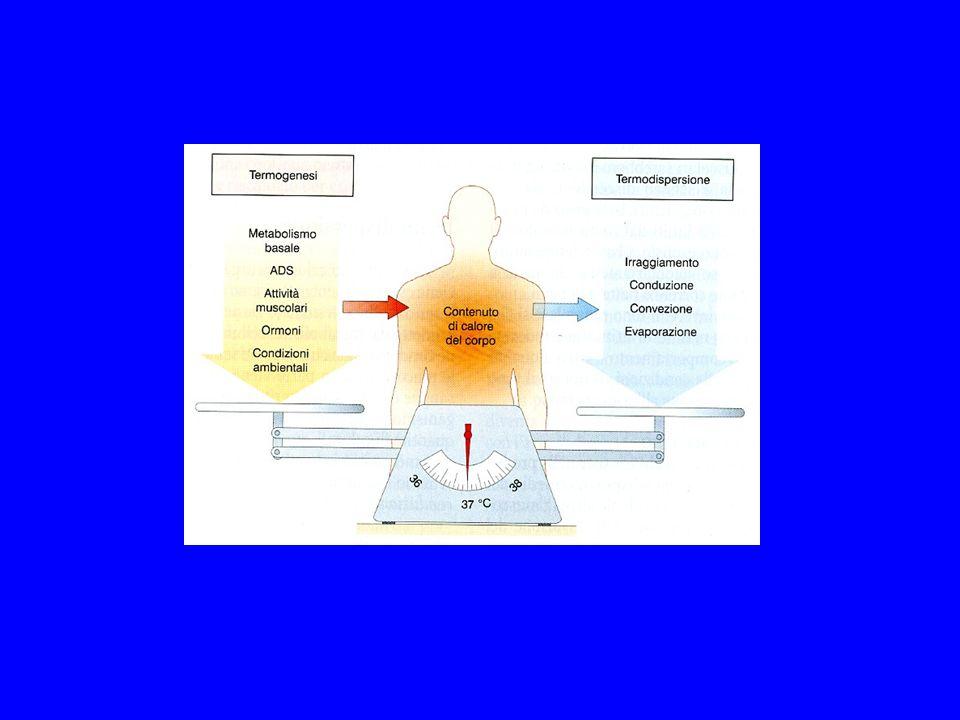 Irraggiamento: trasmissione del calore attraverso onde elettromagnetiche Conduzione: trasmissione del calore per contatto Convezione: trasmissione del calore attraverso l aria e l acqua