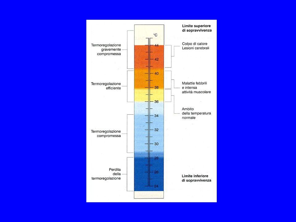 SUDORAZIONE La velocità di secrezione determina la composizione in ioni del sudore, che rimane comunque ipotonico.