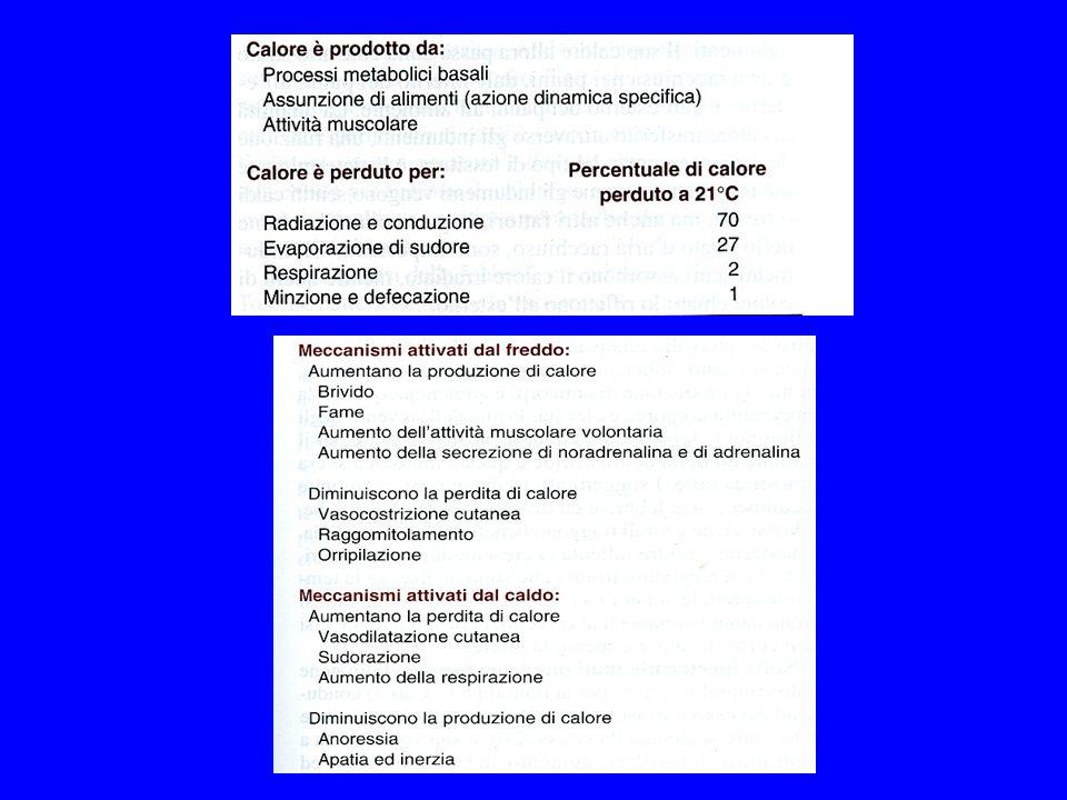 La tabella riporta una valutazione dellindice di calore in base a misurazioni di T° con bulbo secco e bagnato