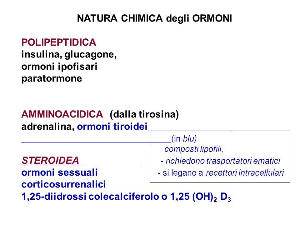 NATURA CHIMICA degli ORMONI POLIPEPTIDICA insulina, glucagone, ormoni ipofisari paratormone AMMINOACIDICA (dalla tirosina) adrenalina, ormoni tiroidei (in blu) composti lipofili, STEROIDEA - richiedono trasportatori ematici ormoni sessuali - si legano a recettori intracellulari corticosurrenalici 1,25-diidrossi colecalciferolo o 1,25 (OH) 2 D 3