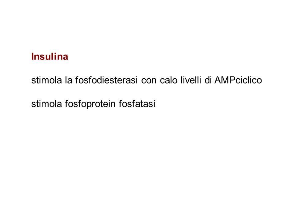 Insulina stimola la fosfodiesterasi con calo livelli di AMPciclico stimola fosfoprotein fosfatasi