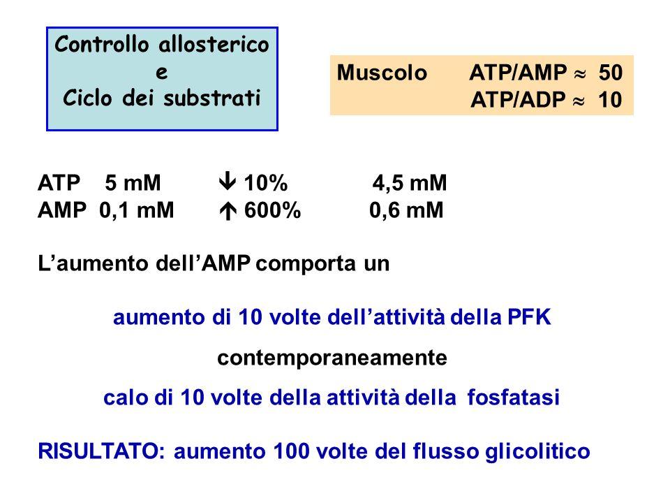 Muscolo ATP/AMP 50 ATP/ADP 10 Controllo allosterico e Ciclo dei substrati ATP 5 mM 10%4,5 mM AMP 0,1 mM 600% 0,6 mM Laumento dellAMP comporta un aumento di 10 volte dellattività della PFK contemporaneamente calo di 10 volte della attività della fosfatasi RISULTATO: aumento 100 volte del flusso glicolitico