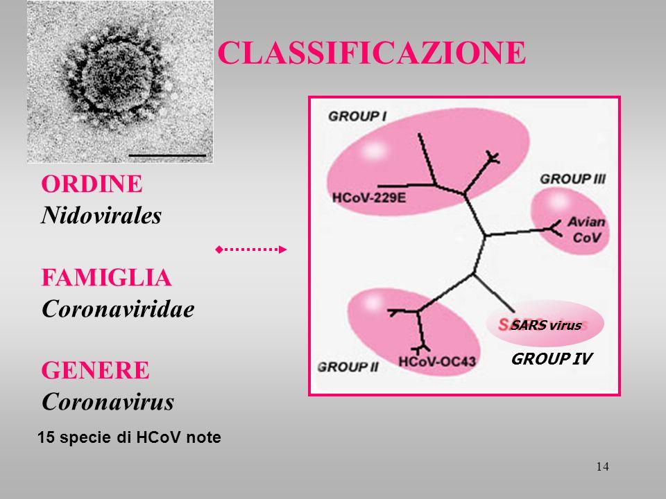 14 ORDINE Nidovirales FAMIGLIA Coronaviridae GENERE Coronavirus CLASSIFICAZIONE GROUP IV 15 specie di HCoV note SARS virus