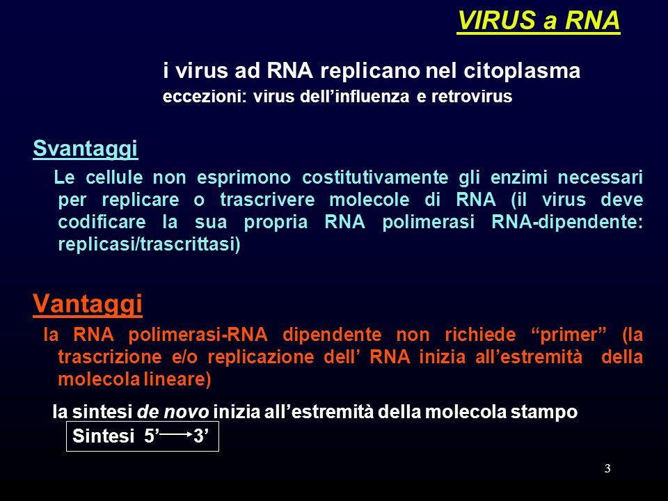 3 VIRUS a RNA Svantaggi Le cellule non esprimono costitutivamente gli enzimi necessari per replicare o trascrivere molecole di RNA (il virus deve codificare la sua propria RNA polimerasi RNA-dipendente: replicasi/trascrittasi) Vantaggi la RNA polimerasi-RNA dipendente non richiede primer (la trascrizione e/o replicazione dell RNA inizia allestremità della molecola lineare) i virus ad RNA replicano nel citoplasma eccezioni: virus dellinfluenza e retrovirus la sintesi de novo inizia allestremità della molecola stampo Sintesi 5 3