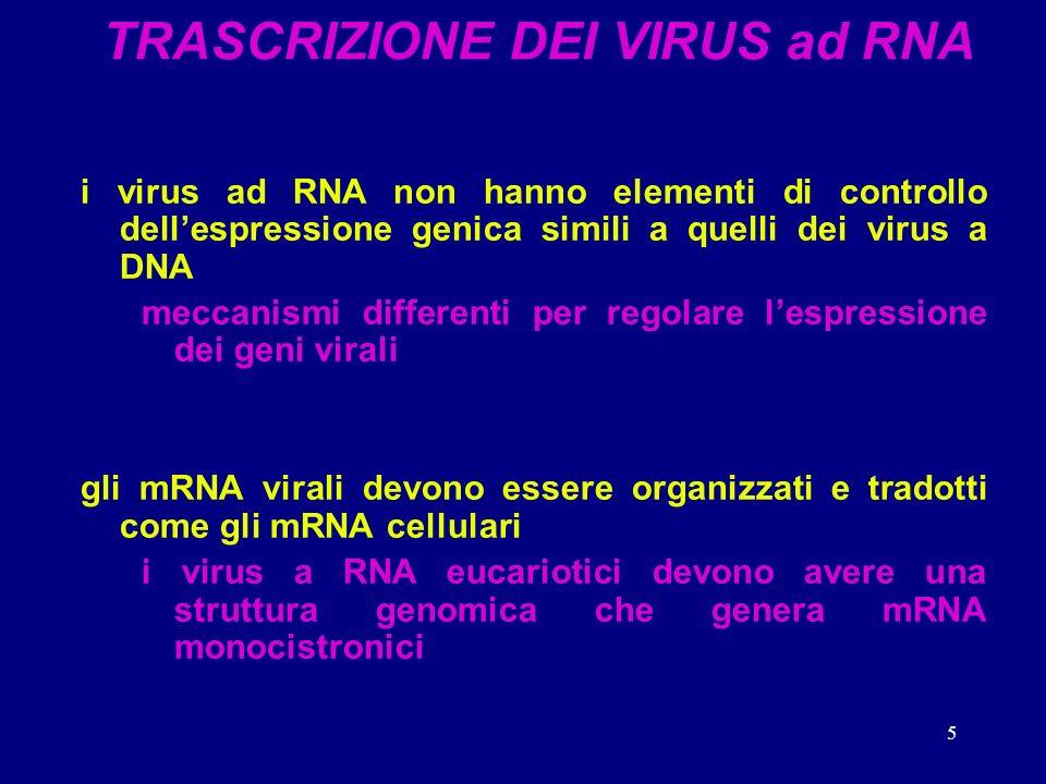 5 TRASCRIZIONE DEI VIRUS ad RNA i virus ad RNA non hanno elementi di controllo dellespressione genica simili a quelli dei virus a DNA meccanismi differenti per regolare lespressione dei geni virali gli mRNA virali devono essere organizzati e tradotti come gli mRNA cellulari i virus a RNA eucariotici devono avere una struttura genomica che genera mRNA monocistronici