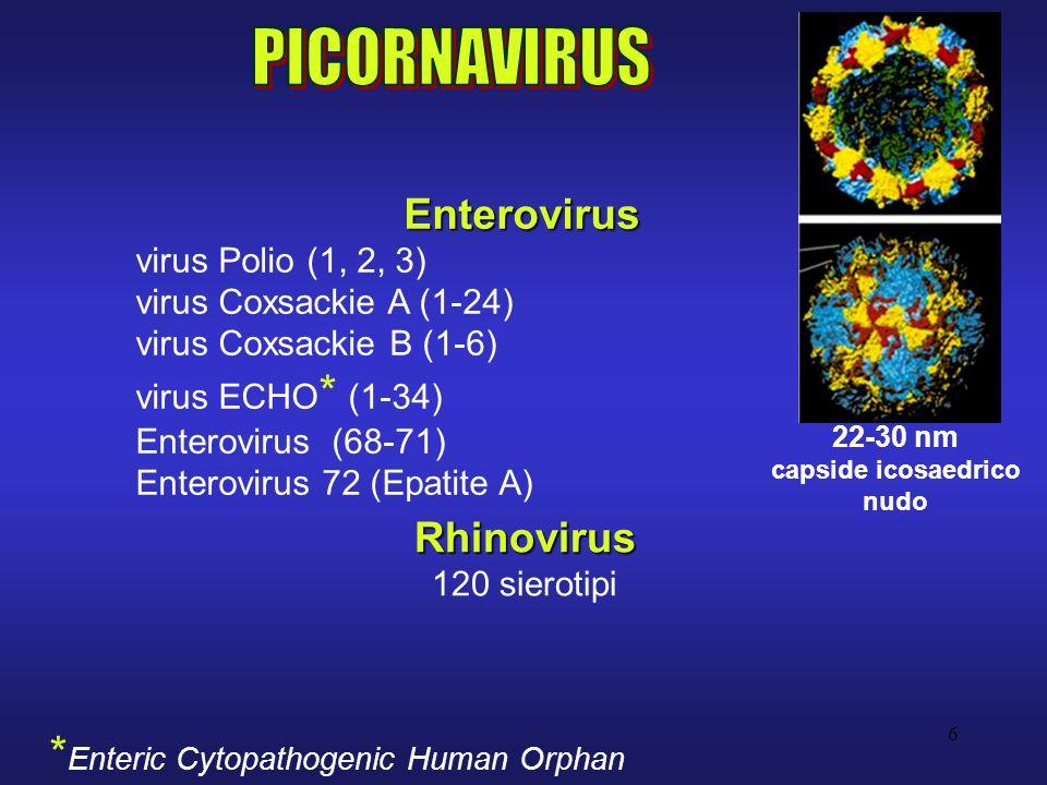 6 Enterovirus virus Polio (1, 2, 3) virus Coxsackie A (1-24) virus Coxsackie B (1-6) virus ECHO * (1-34) Enterovirus (68-71) Enterovirus 72 (Epatite A) Rhinovirus 120 sierotipi * Enteric Cytopathogenic Human Orphan 22-30 nm capside icosaedrico nudo