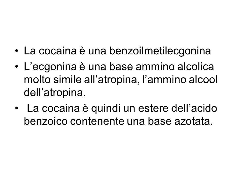 La cocaina è una benzoilmetilecgonina Lecgonina è una base ammino alcolica molto simile allatropina, lammino alcool dellatropina. La cocaina è quindi