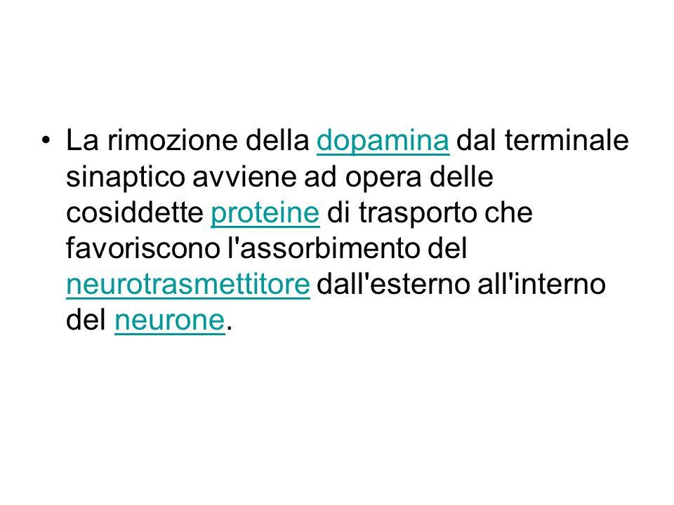 La rimozione della dopamina dal terminale sinaptico avviene ad opera delle cosiddette proteine di trasporto che favoriscono l'assorbimento del neurotr