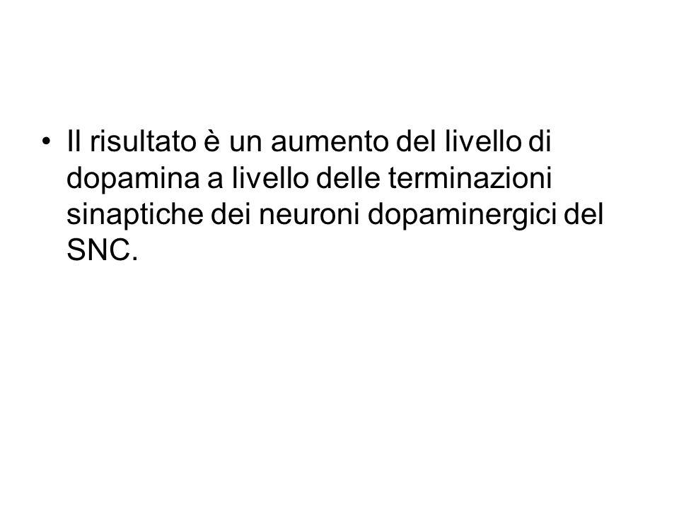 Il risultato è un aumento del livello di dopamina a livello delle terminazioni sinaptiche dei neuroni dopaminergici del SNC.