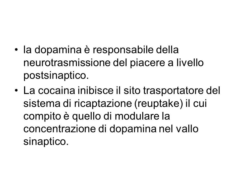 la dopamina è responsabile della neurotrasmissione del piacere a livello postsinaptico. La cocaina inibisce il sito trasportatore del sistema di ricap