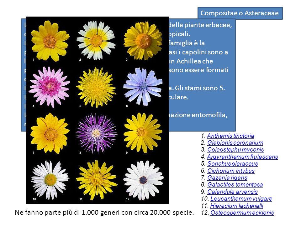 Artemisia absintium Per quanto riguarda le proprietà medicamentose di questa pianta si hanno notizie che risalgono dall antichità, ve ne sono cenni anche nella Bibbia.
