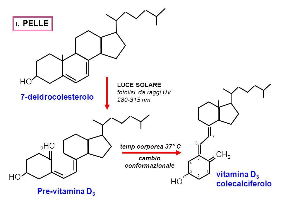 HO 2 HC I. PELLE 7-deidrocolesterolo Pre-vitamina D 3 LUCE SOLARE fotolisi da raggi UV 280-315 nm CH 2 HO vitamina D 3 colecalciferolo cambio conforma