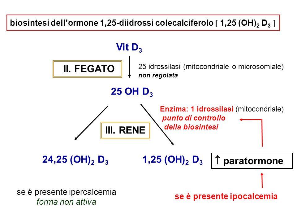 biosintesi dellormone 1,25-diidrossi colecalciferolo 1,25 (OH) 2 D 3 Vit D 3 II. FEGATO 25 idrossilasi (mitocondriale o microsomiale) non regolata 25
