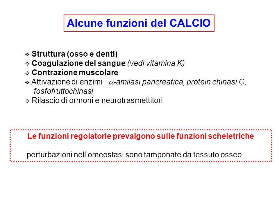 Alcune funzioni del CALCIO Struttura (osso e denti) Coagulazione del sangue (vedi vitamina K) Contrazione muscolare Attivazione di enzimi -amilasi pan