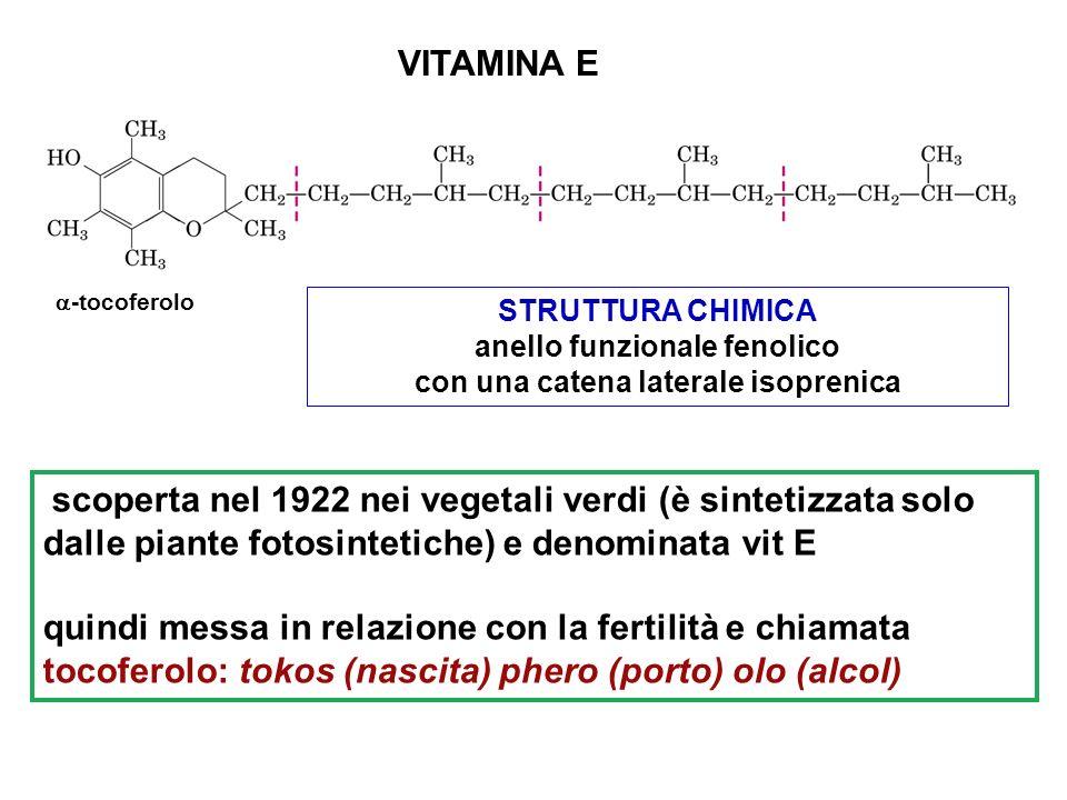 VITAMINA E scoperta nel 1922 nei vegetali verdi (è sintetizzata solo dalle piante fotosintetiche) e denominata vit E quindi messa in relazione con la