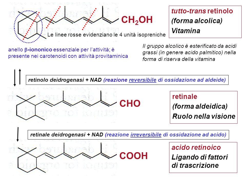 tutto-trans retinolo (forma alcolica) Vitamina anello -iononico essenziale per lattività; è presente nei carotenoidi con attività provitaminica COOH a