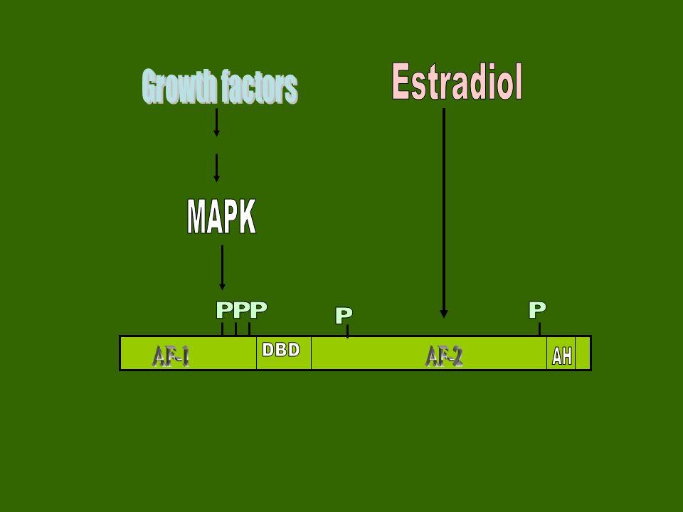 Regulation of ER activity by coactivators and corepressors