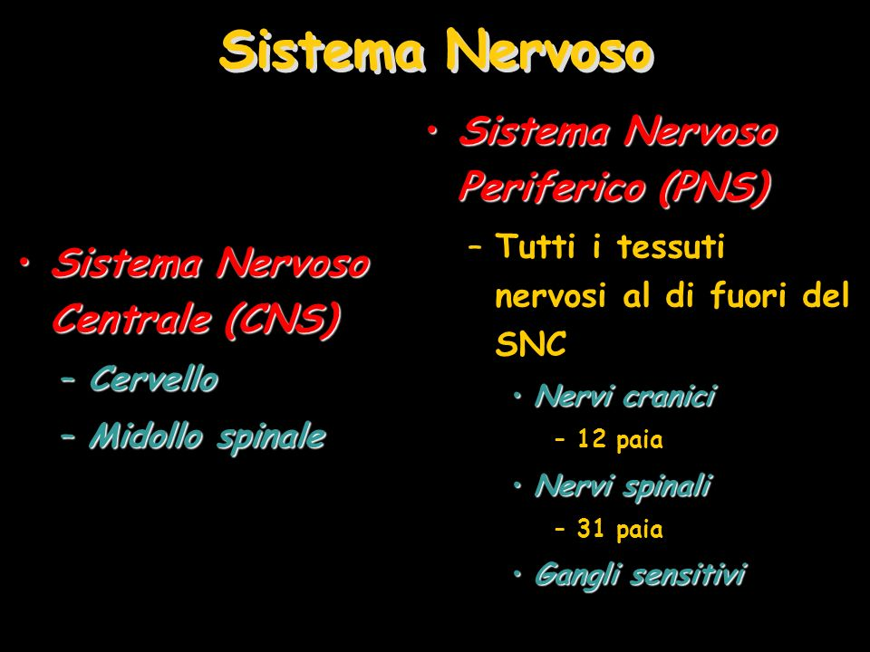 Sistema Nervoso Sistema Nervoso Centrale (CNS)Sistema Nervoso Centrale (CNS) –Cervello –Midollo spinale Sistema Nervoso Periferico (PNS)Sistema Nervos