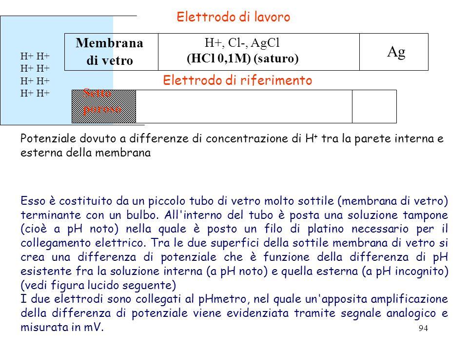 94 H+ Potenziale dovuto a differenze di concentrazione di H + tra la parete interna e esterna della membrana Elettrodo di lavoro Elettrodo di riferime